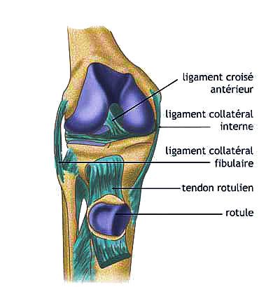 Mésothérapie - Coupe du genou